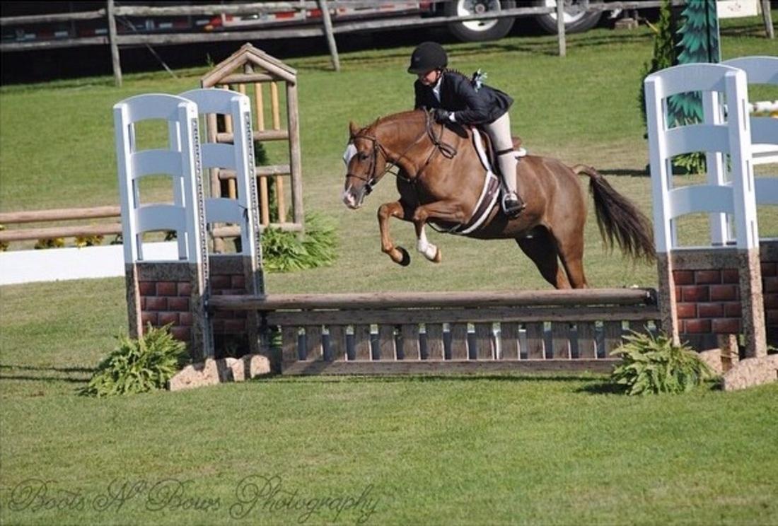 Land S End Frittilary Welsh Pony Hunter